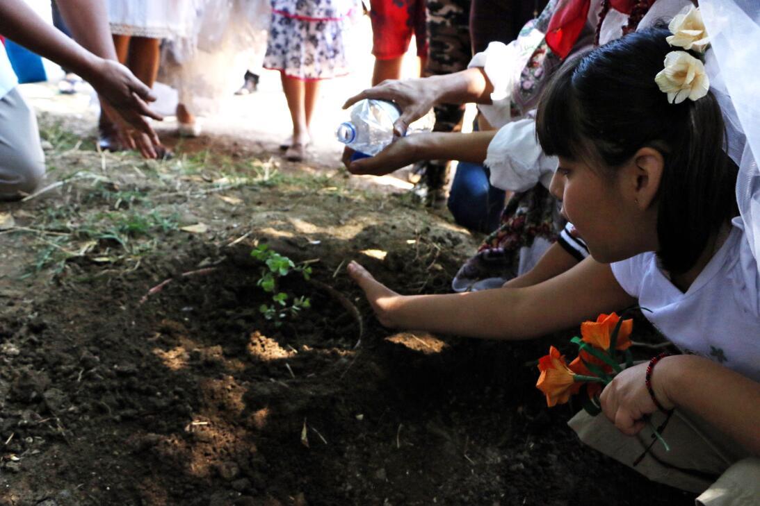 ¿Casarse con un árbol? Ambientalista peruano busca llamar la atención mi...