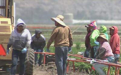 Campesinos de California abrazan la esperanza de una legalización por me...