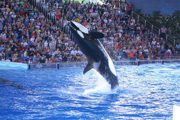 Los parques de diversiones como Sea World y Fiesta Texas, son también un...