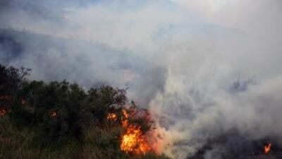 Información gubernamental reportó que más de 14 mil hectáreas fueron afe...