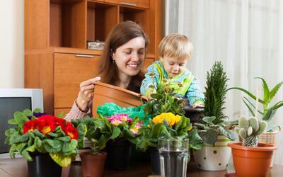 Las plantas que nos dan protección