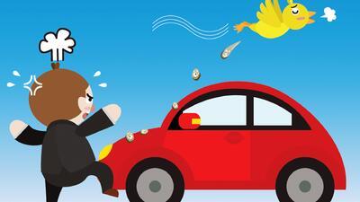 como limpiar la caca de pájaro de tu carro