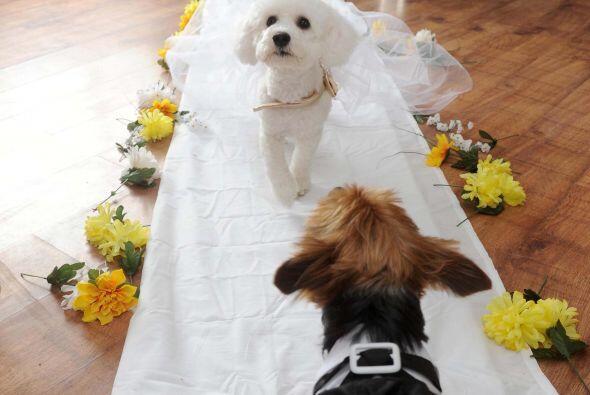 La novia esperaba ansiosa a su guapo prometido.