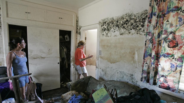 En algunas ocasiones, el moho ha dejado inutilizable viviendas meses des...