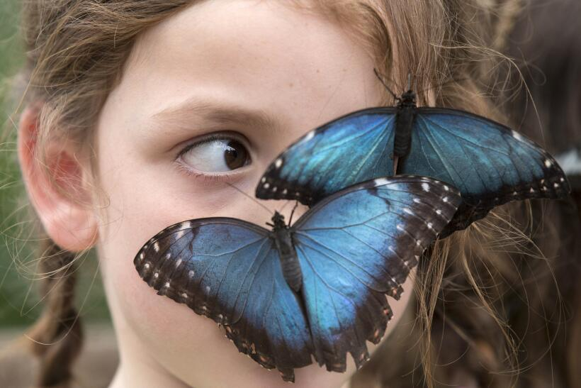 Ya abrió nuevo conservatorio de mariposas en el Fairchild Tropical Botan...