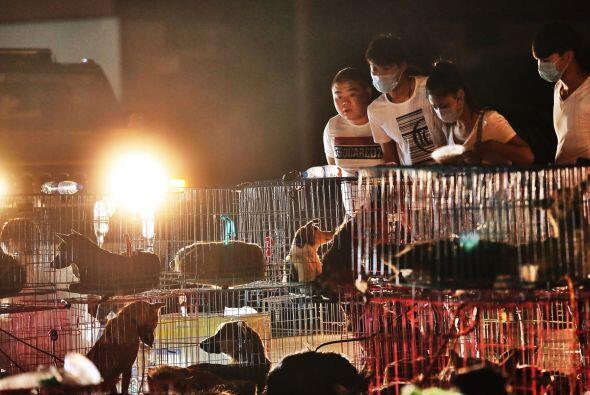 Eran cinco camiones que transportaban a más de dos mil perros que serían...