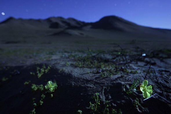 En tanto, una delegación de mineros de Bolivia visitó el lugar para soli...
