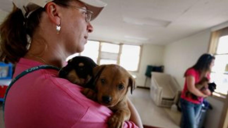 Durante un desastre natural como un huracán, tus mascotas dependen total...