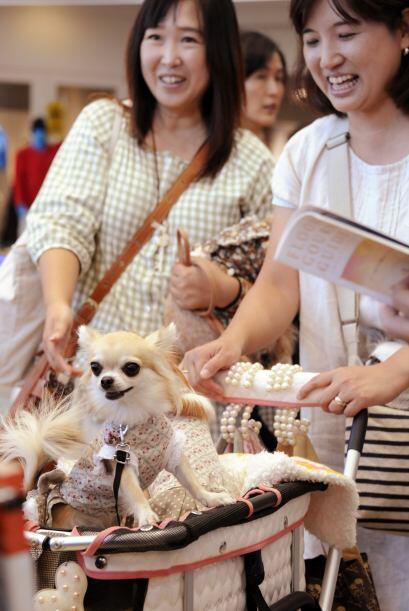 Los dueños, orgullosos de sus mascotas se mostraron felices.
