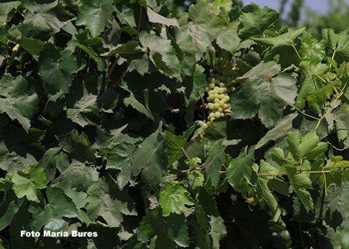 Los cultivos de cítricos, nueces, tomates y otras variedades que crecen...