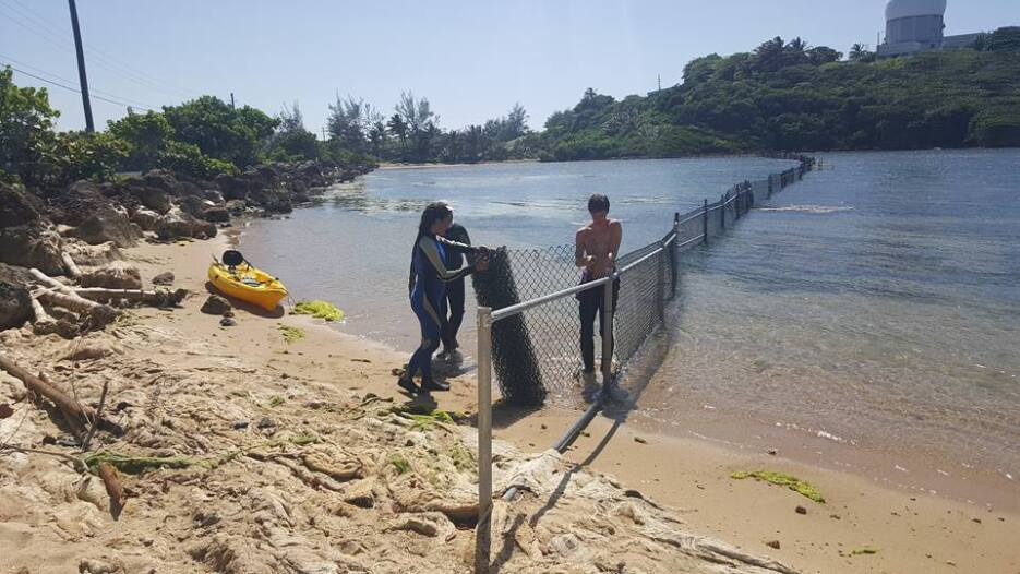 La liberación de los mamíferos hacia un área protegida en la playa Punta...