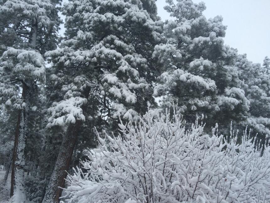 Segundo sistema trae tremenda nevada a Flagstaff