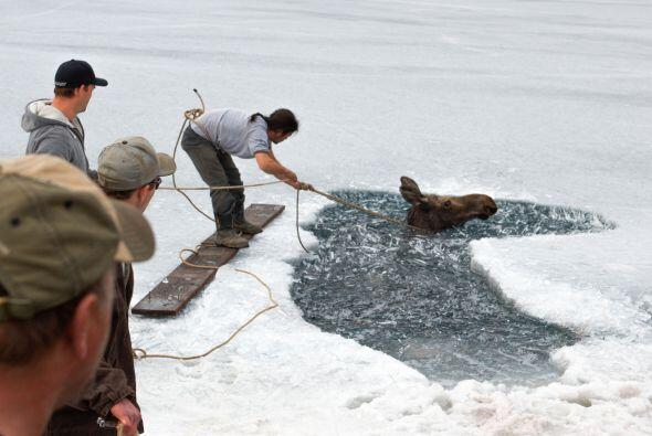 El momento más crítico se vivió cuando se derrumbó más hielo, entonces e...