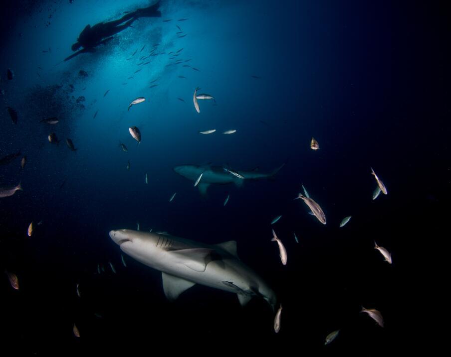 """Un ataque """"extremadamente raro"""" de un tiburón en las costas californiana..."""