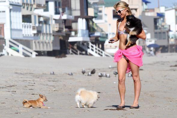 La diva trata como celebridades a sus mascotas.Mira aquí los videos más...