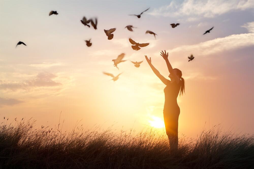 pájaros - libertad