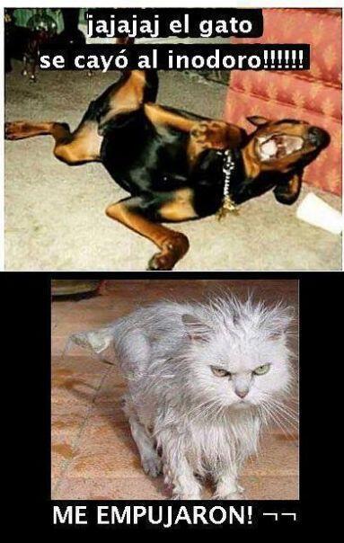"""""""Jajaja, ¡el gato se cayó al inodoro!""""  """"¡Me empujaron!"""""""