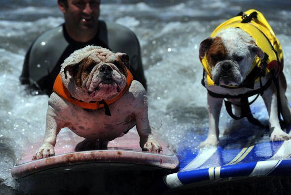 Las playas de California fueron sede de la competencia de perros surfistas.