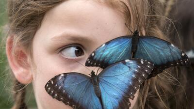 Ya abrió nuevo conservatorio de mariposas en el Fairchild Tropical Botanic Garden