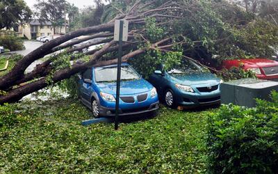 Grupo de vehículos severamente dañado por un árbol...