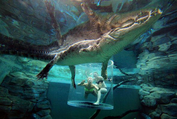 Los valientes vacacionistas se sumergen dentro de un estanque para convi...