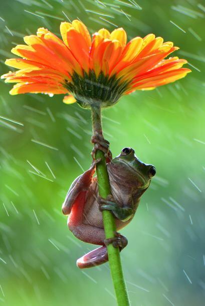 """""""Las ranas se las arreglaron para saltar de flor a flor y sostenerse sob..."""