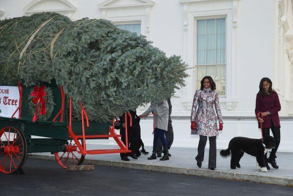 Como es costumbre el árbol que adornará el salón az...