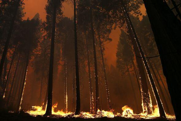El fuego ha calcinado más de cuatro mil hectáreas de matorral, roble y p...