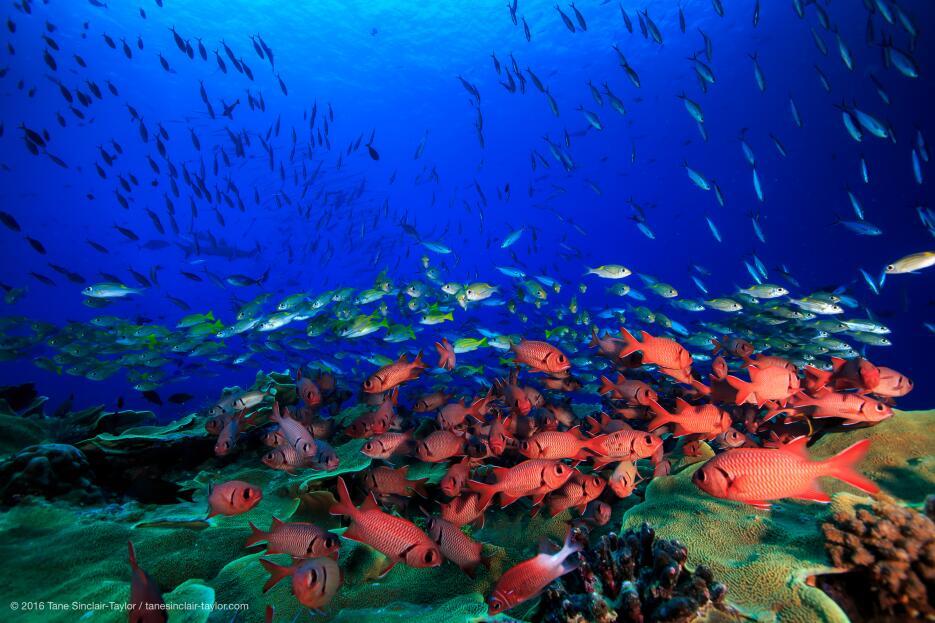El número y tipo de peces que se encuentran en un arrecife son un indica...