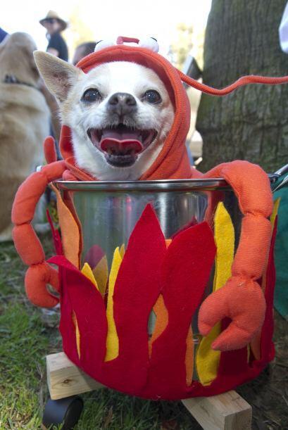 ¿Se te antoja una langosta? Carga a tu perrito en una olla decora...