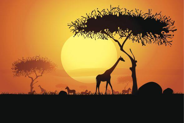 """""""En África, reserva el Serengeti. Prefiero animales salvajes que persona..."""