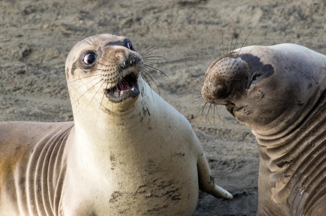 17 fotografías de animales que te provocarán unas cuantas sonrisas bm-05...