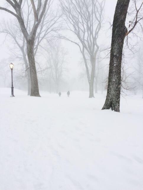 Neoyorquinos se aventuran en Central Park durante tormenta 2.JPG