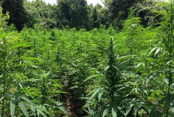 Agentes anti-narcóticos del área de Houston hallaron una p...