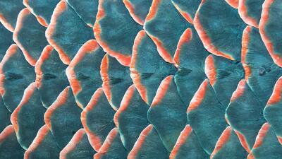 ¿Puedes adivinar de qué se tratan estas imágenes de texturas naturales?