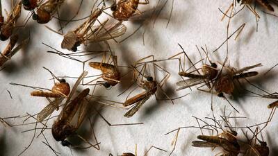 Autoridades de Fresno alertan sobre le presencia de mosquitos portadores...