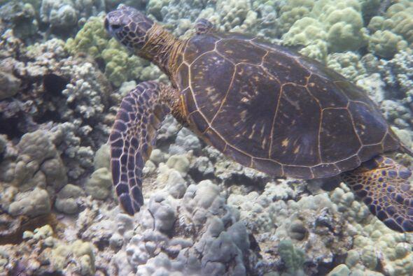 Estos animales hacen de los arrecifes su hogar.