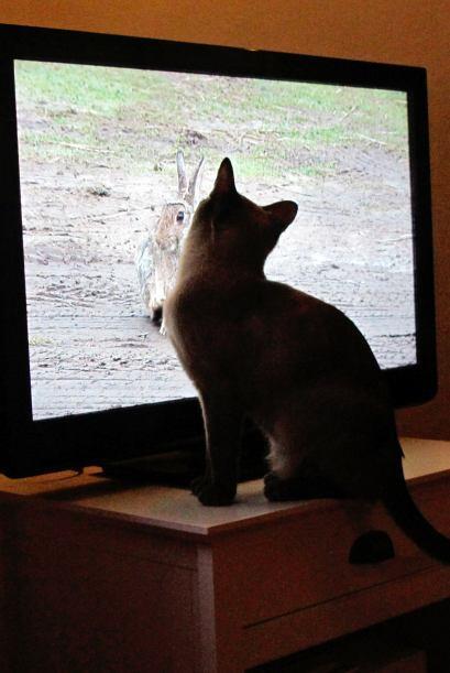 A Coco le gusta ver desde la ventana a los pájaros alimentado a s...
