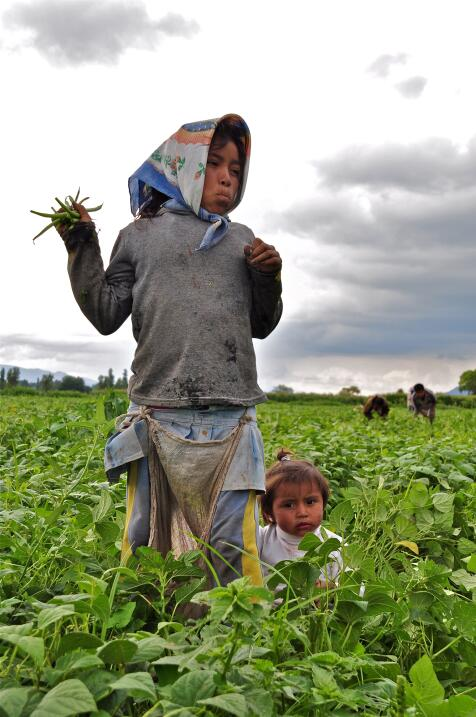 Niñas como esta trabajan en el campo con sus hermanos porque sus familia...