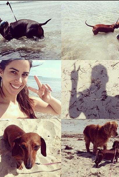 Sus encantadoras mascotas fueron por primera vez a la playa y estuvieron...