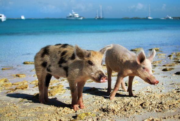¿Te gustaría visitar la playa y nadar al lado de estos higiénicos y muy...
