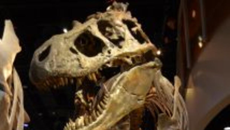 La nueva especie es muy parecida al Tiranosaurio Rex pero más pequeña