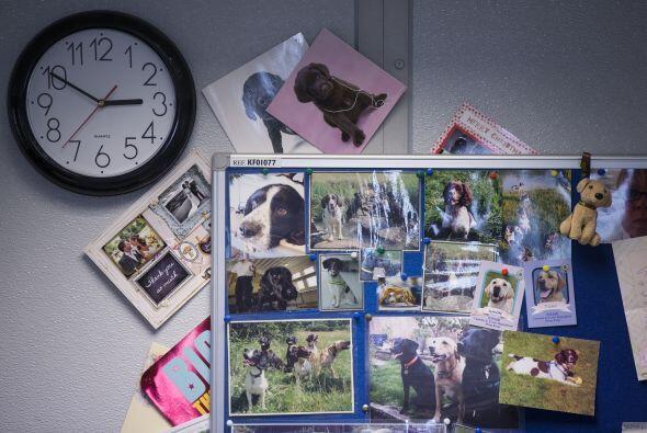 Los perros han logrado encontrar un total de 102  paquetes de droga que...