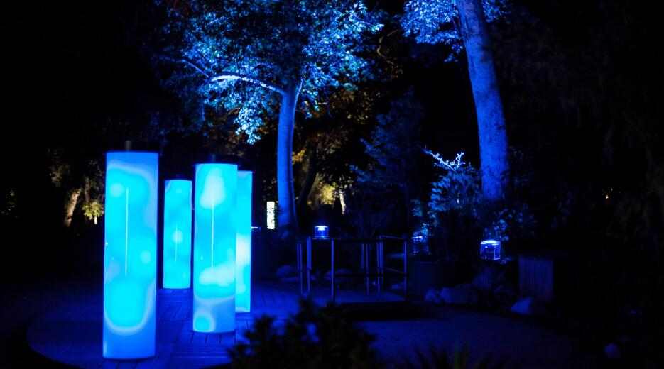El bosque iluminado de Descanso Gardens, en California.