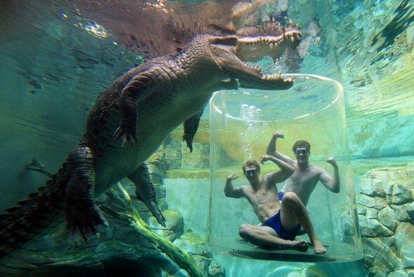 Este parque es la casa de algunos de los cocodrilos más grandes del mundo.