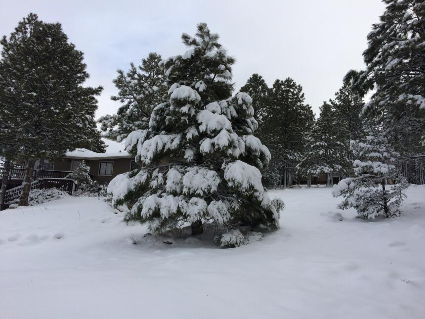 En fotos: La ciudad de Flagstaff amaneció cubierta de nieve IMG_3801.JPG