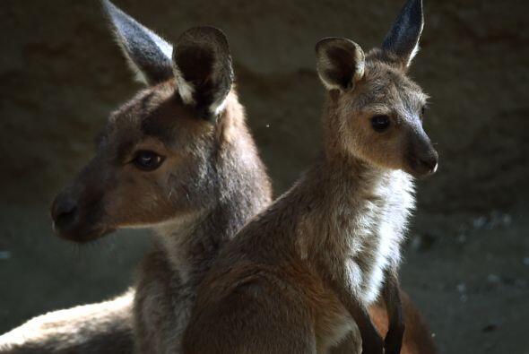 Por eso el zoológico tendrá nuevos animalitos conforme más se acerca la...