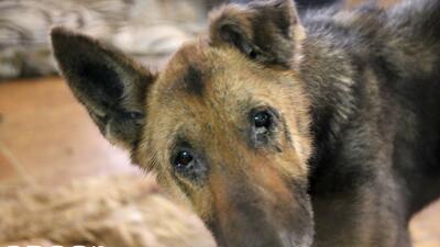 Encuentran a 11 cachorros muertos en un congelador de una casa en Texas
