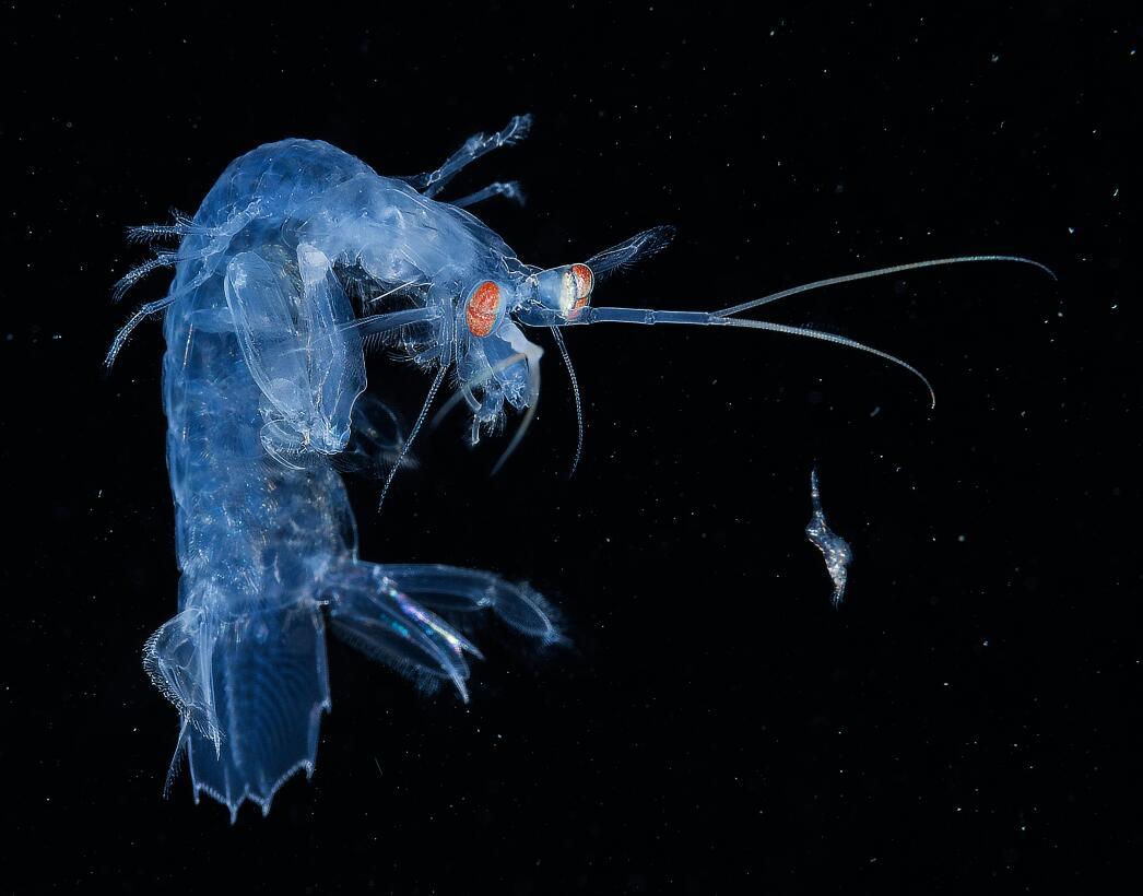 La bella y frágil vida que danza en el azul profundo 201yatwaiso.jpg