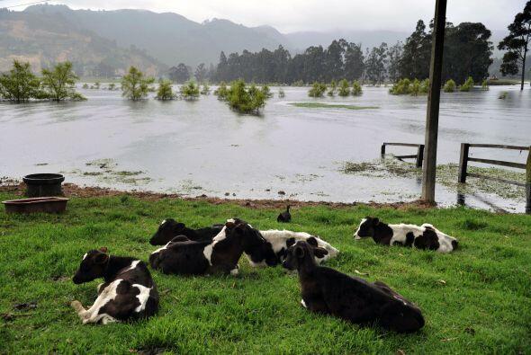 El Ministerio de Agricultura reportó que un millón de hectáreas de tierr...